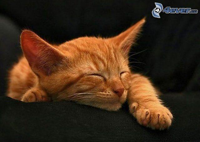 Schlafendes Kätzchen, Schlafen