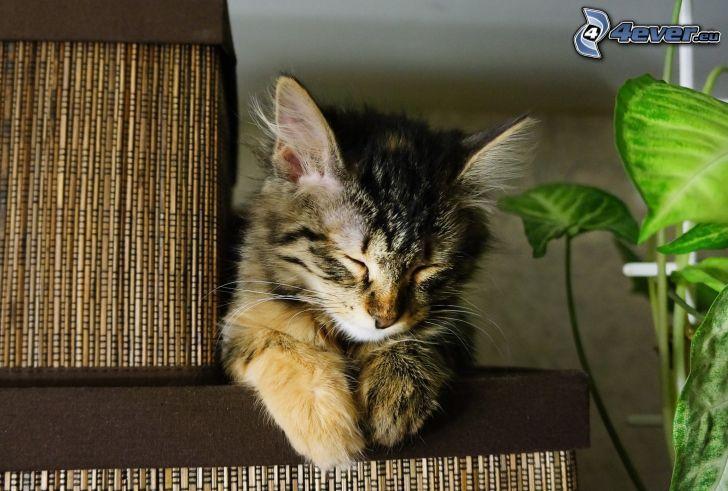 Schlafendes Kätzchen