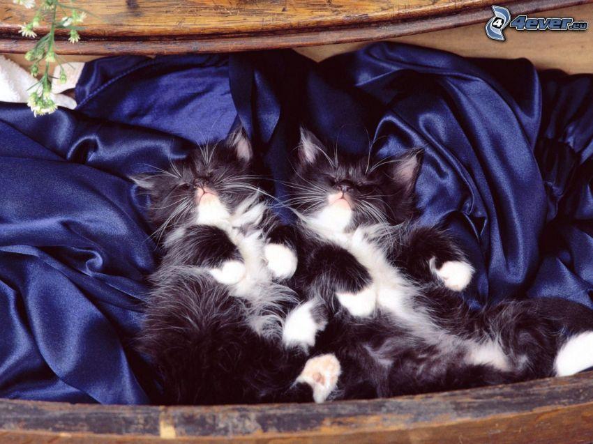 schwarzen und weißen Kätzchen, Seide