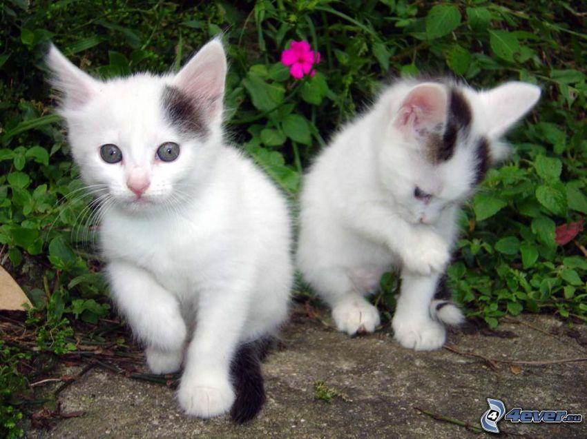 schwarzen und weißen Kätzchen