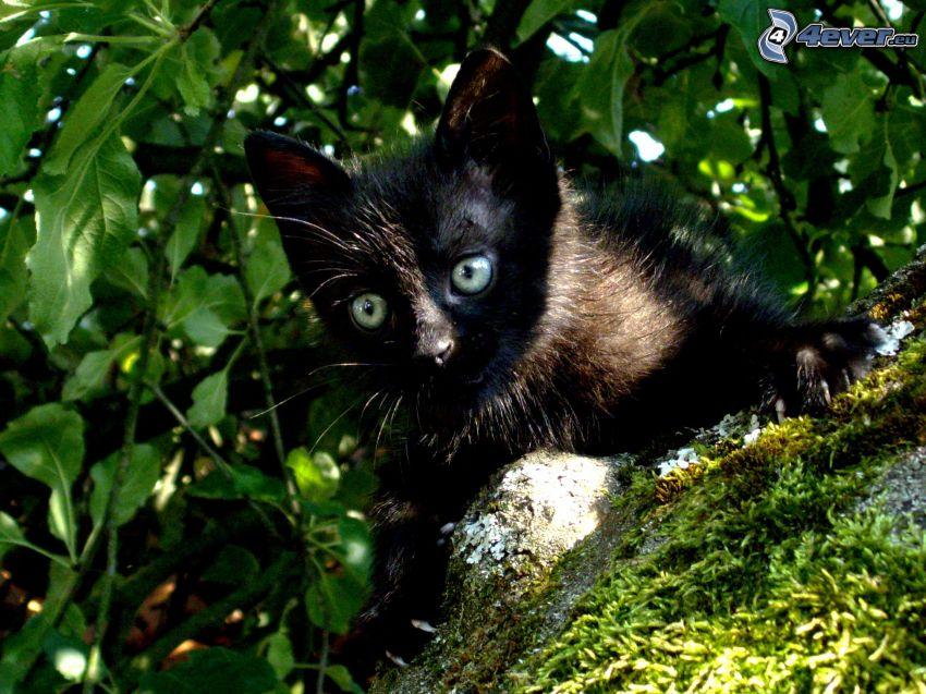 schwarzes Kätzchen, Baum, Blätter, Moos