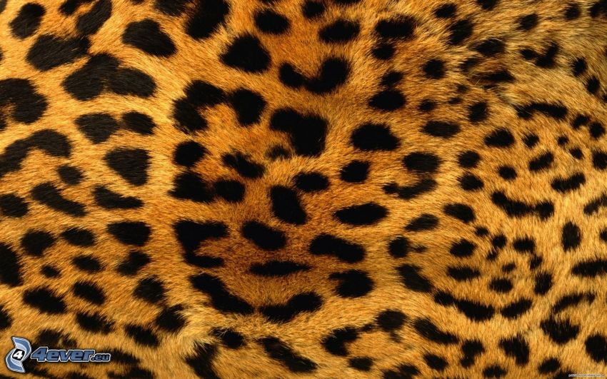 Leoparden-Muster