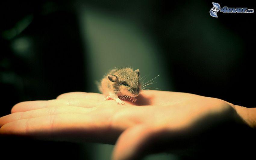 Maus, Handfläche