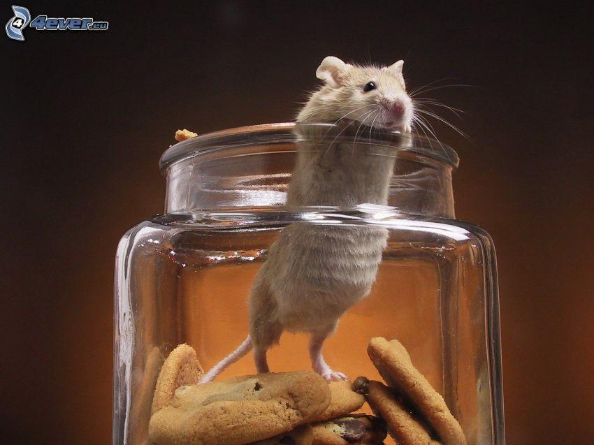 Maus, Kekse