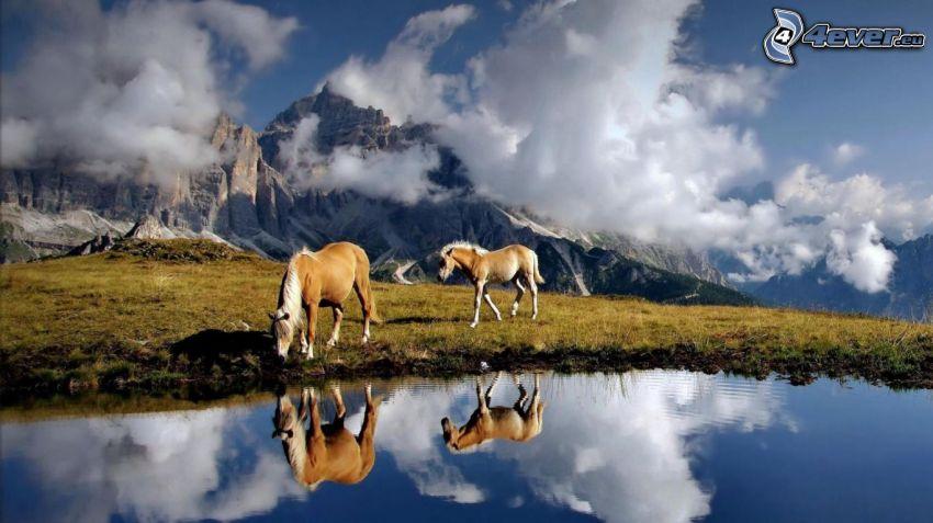 braune Pferde, See, Spiegelung, felsige Berge, Wolken