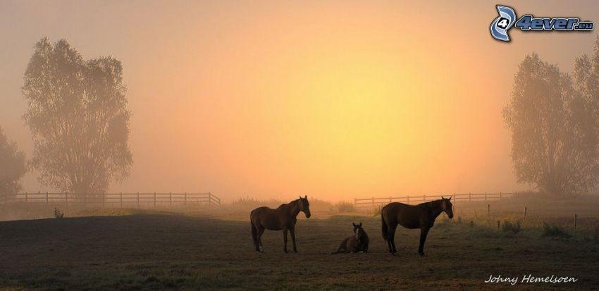 braune Pferde, Zaun, schwache Sonne