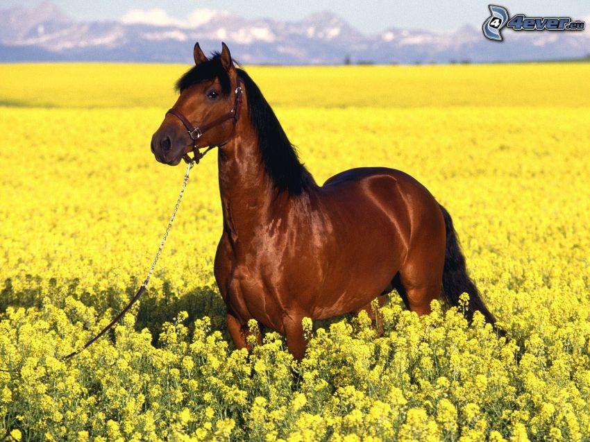 braunes Pferd, gelbe Blumen, Wiese, Leiten, Berge