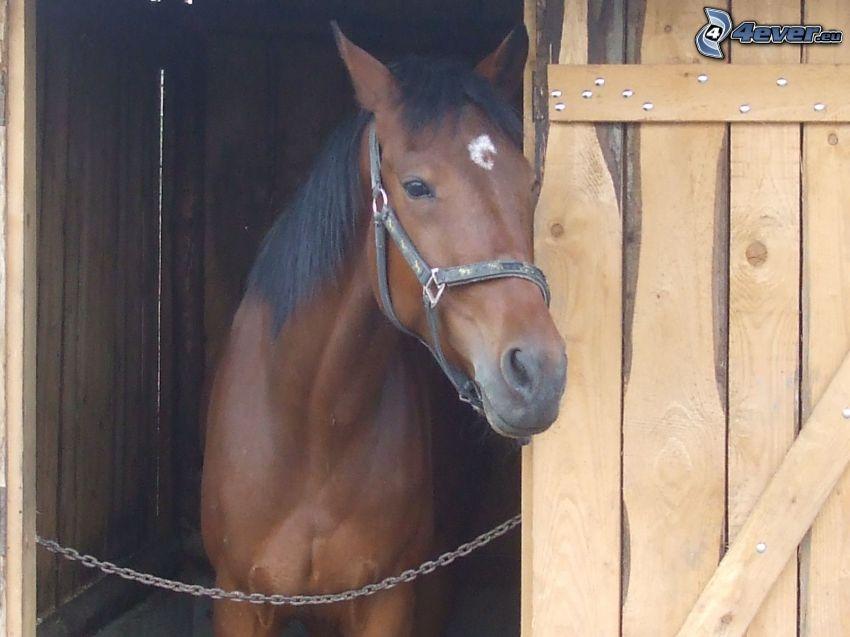 braunes Pferd, Holztor