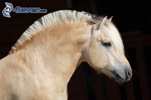 braunes Pferd, Mähne, Ohren, Stall