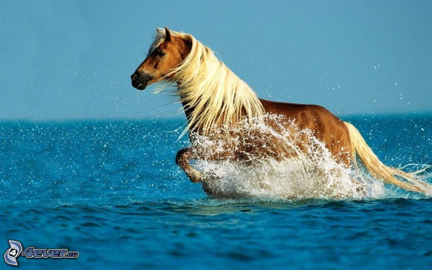 braunes Pferd, Meer
