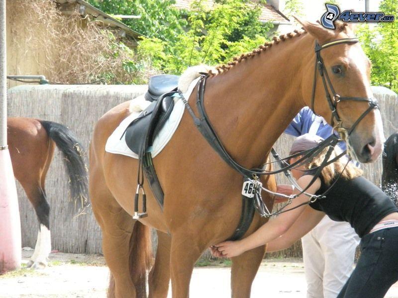 braunes Pferd, Pferderennen