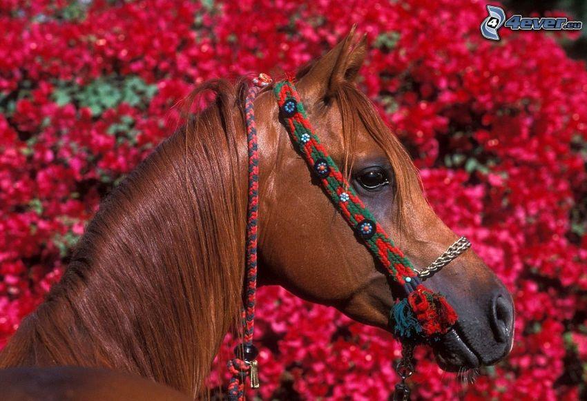 braunes Pferd, rosa Blumen