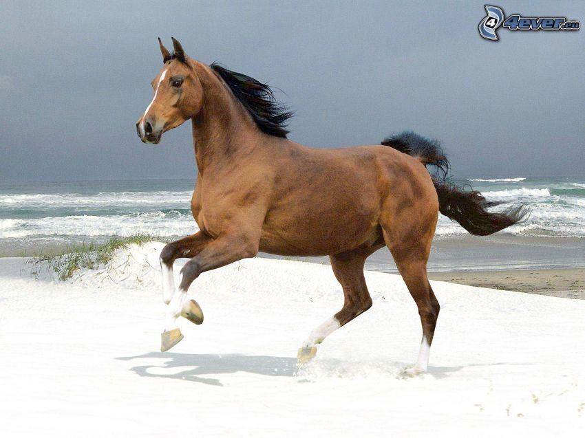 braunes Pferd, Schnee