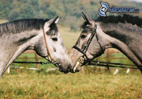 gefleckte Pferde, Tiere