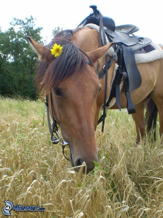 Pferd, Feld