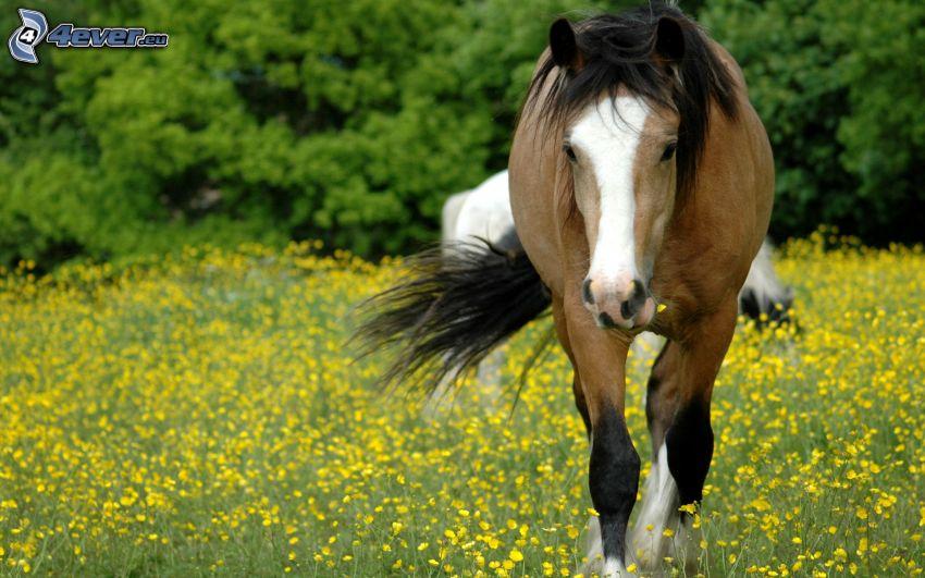 Pferd, gelbe Blumen