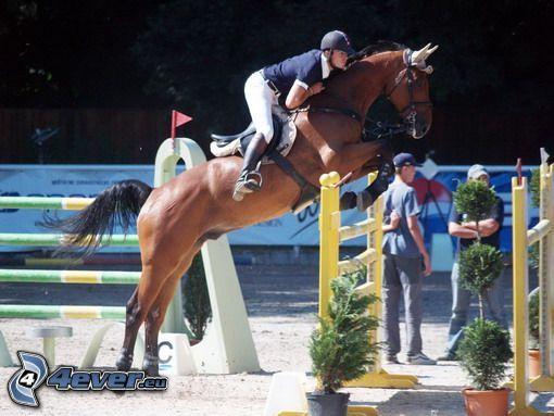 Pferd, Jockey, Hindernis