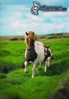 Pferd, Tier