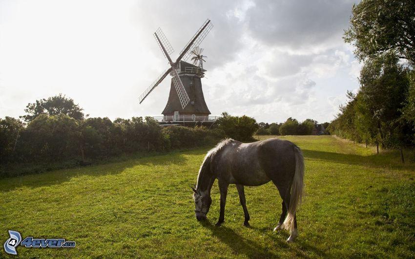 Pferd, Windmühle