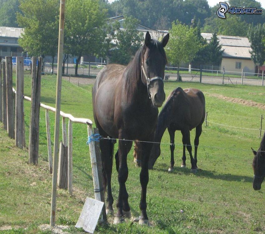 Pferd, Zaun
