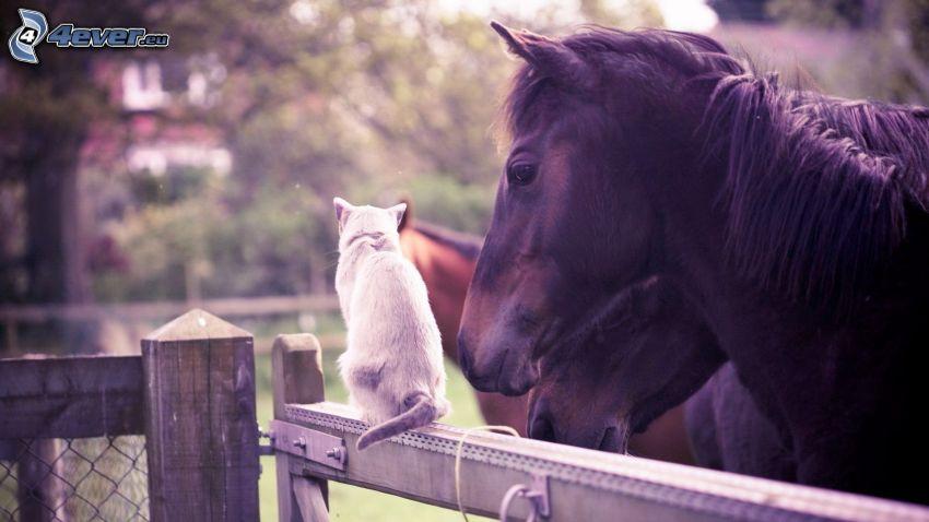 Pferde, Katze auf Zaun