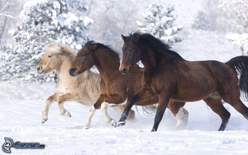 Pferde, Schnee