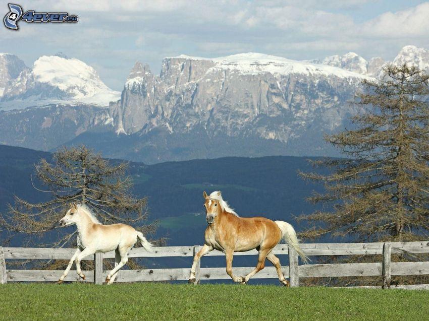 Pferde im Auslauf, Berge