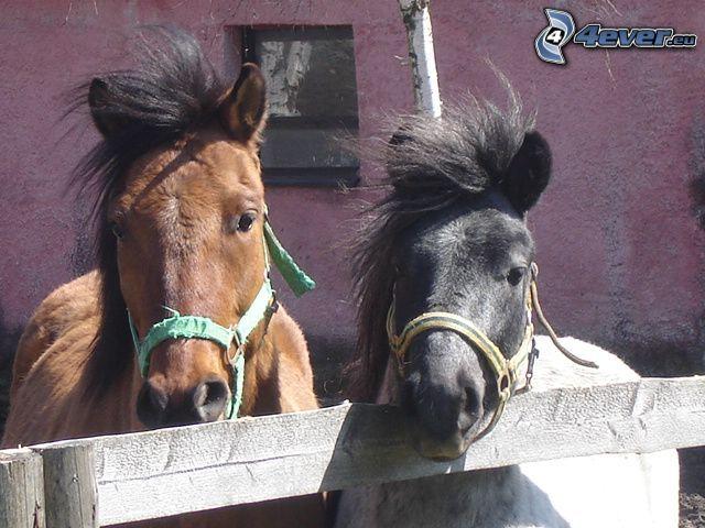 Pferde im Auslauf