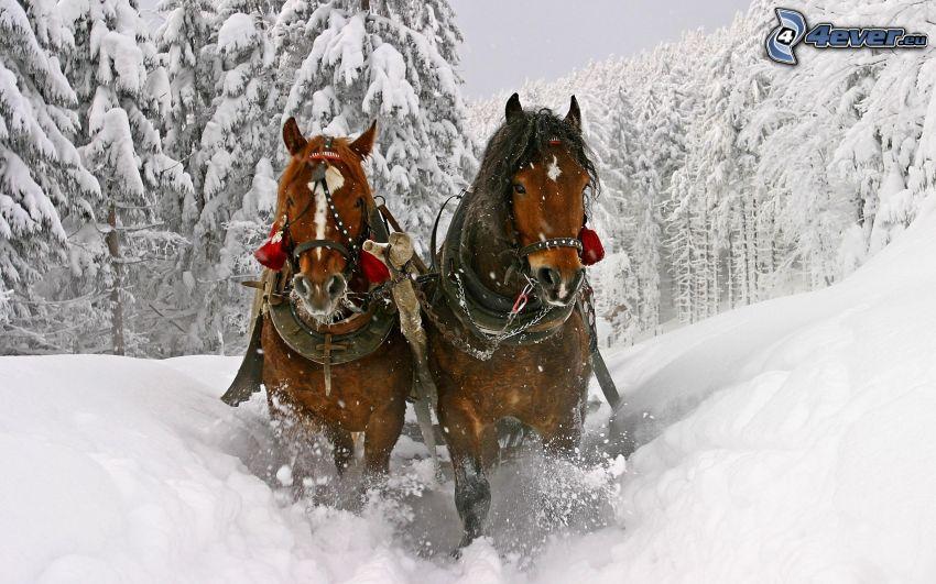 Pferdegespann, Schnee, schneebedeckte Straße, verschneiter Wald