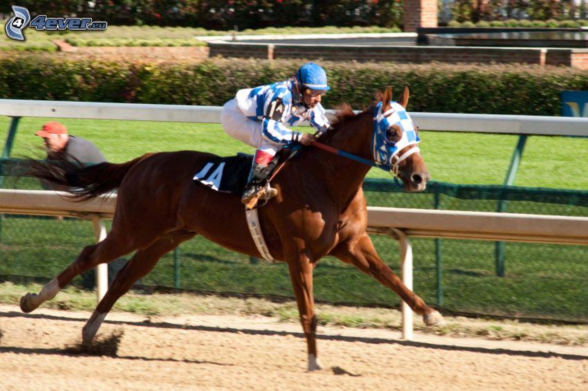 Pferderennen, braunes Pferd, Jockey
