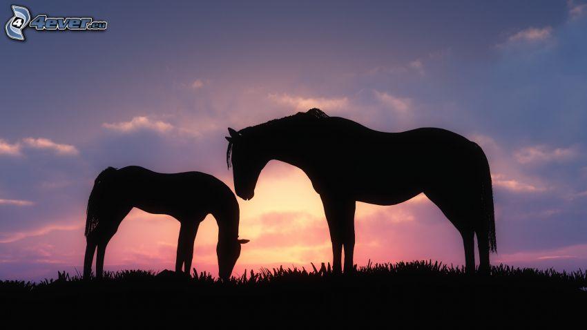 Silhouetten der Pferde, Abendhimmel
