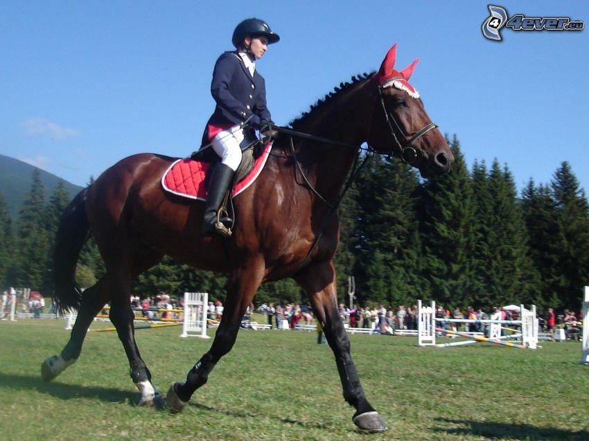 Springreiten, braunes Pferd, Reiter