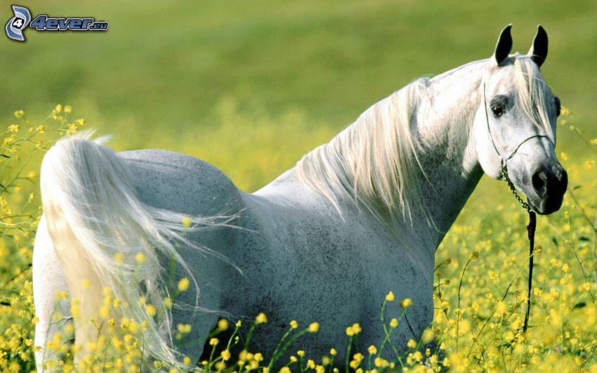 weißes Pferd, Blumen