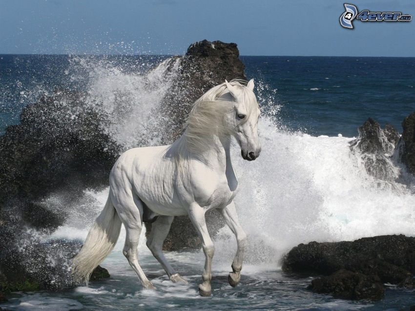 weißes Pferd, Felsen im Meer, Welle