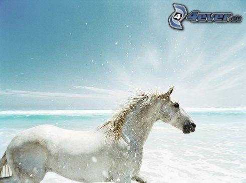weißes Pferd, Meer, Himmel