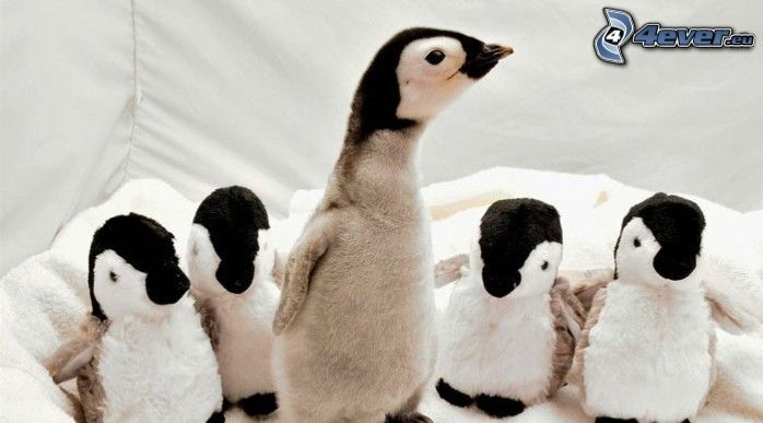 Pinguinküken, Plüschtiere