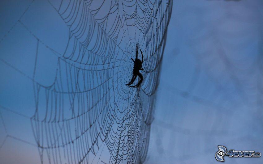 Spinne auf dem Spinnennetz