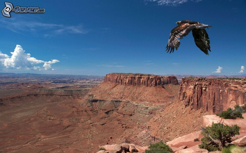 Adler, Flug, Aussicht auf die Landschaft