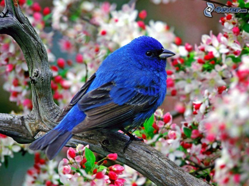 blauer Vogel auf einem Zweig, blühender Baum