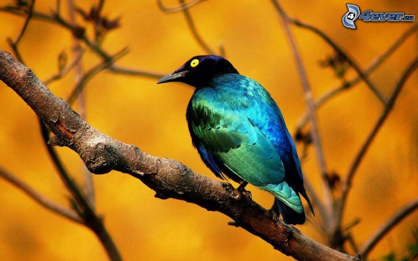 Großzügig Blaue Vogel Malvorlagen Zeitgenössisch - Framing ...