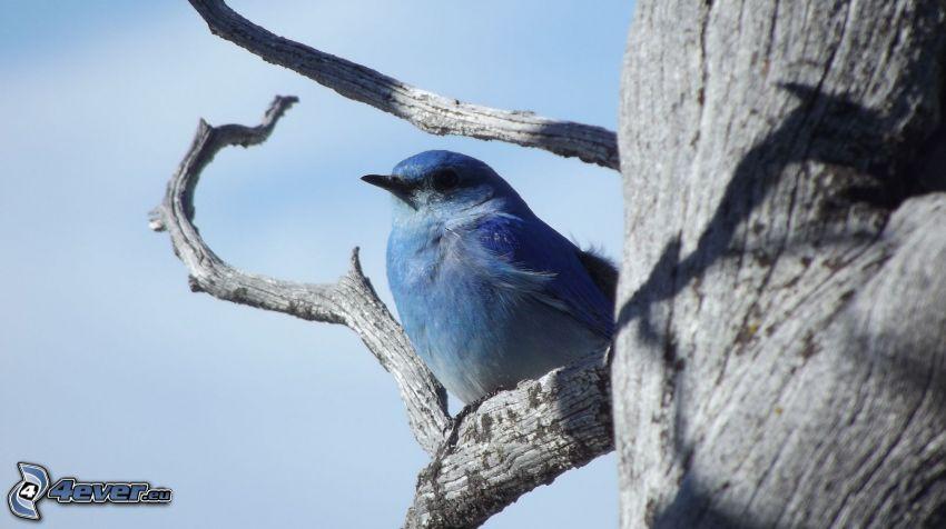 blauer Vogel auf einem Zweig