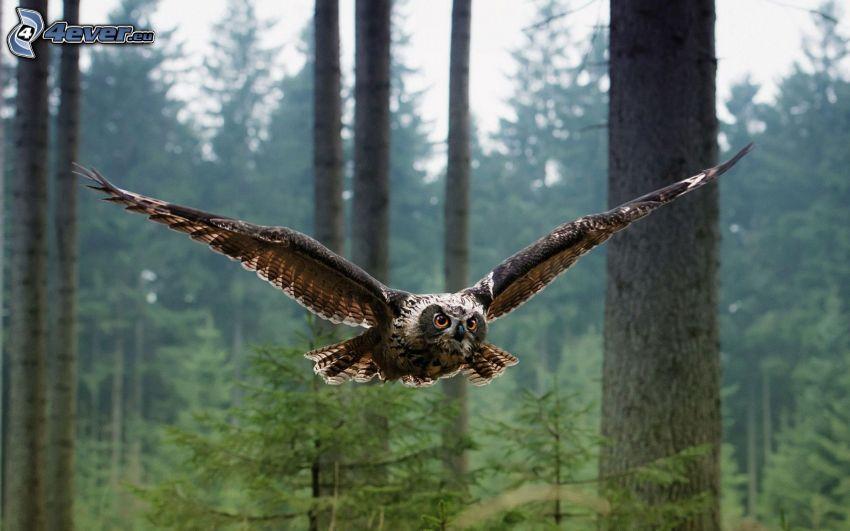 braune Eule, Flügel, Flug, Wald