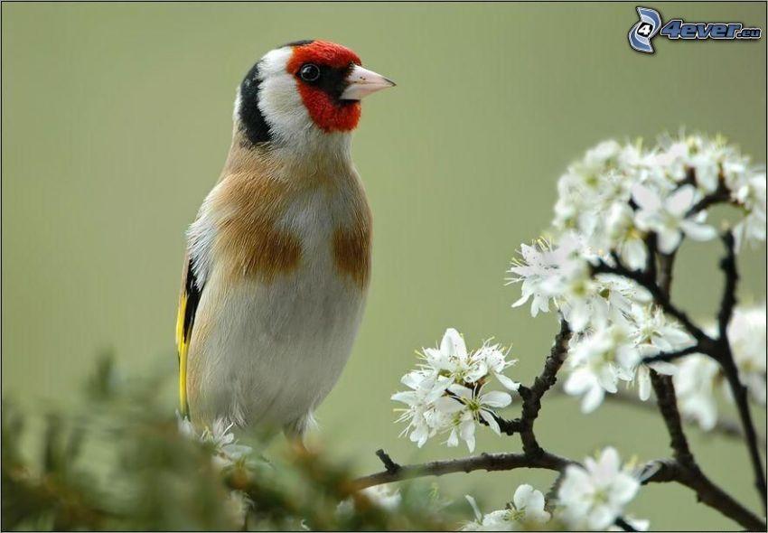 bunter Vogel, blühender Baum, Blumen