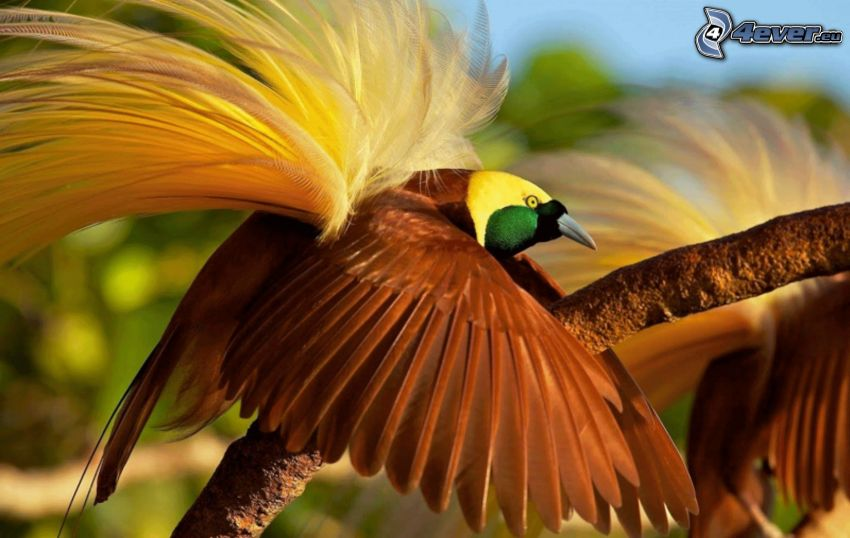 bunter Vogel, Flügel, Ast