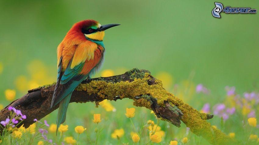 bunter Vogel, Holz, Moos, gelbe Blumen