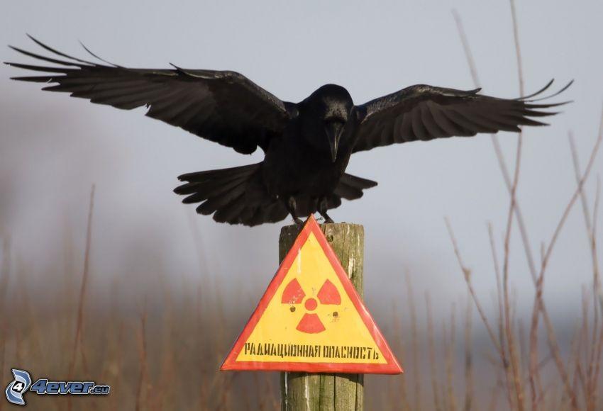 Krähe, Schild, radioaktive