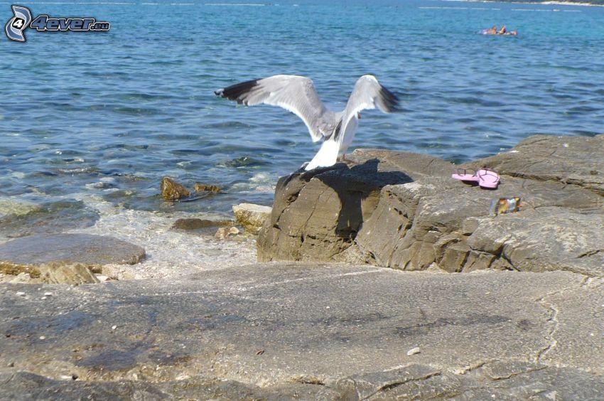 Möwe, Flügel, Felsen im Meer