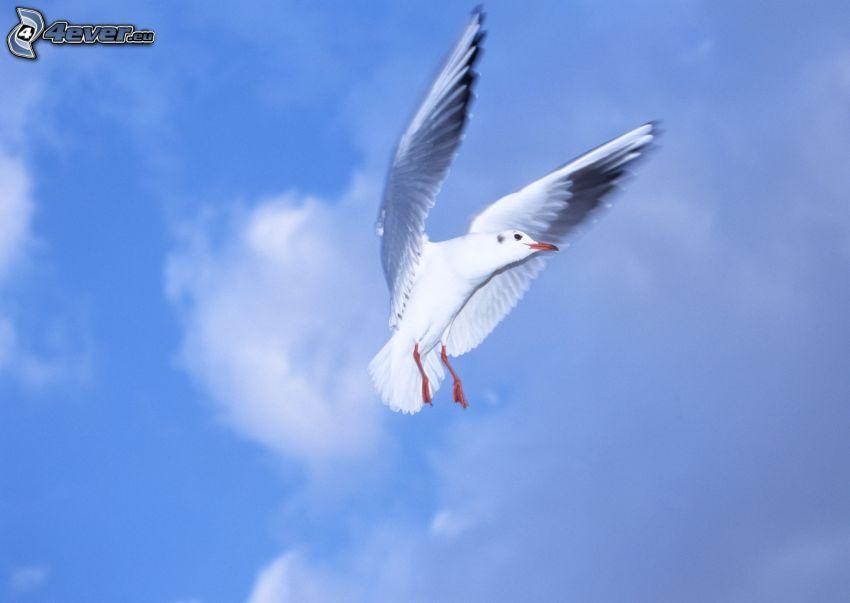 Möwe, Flügel