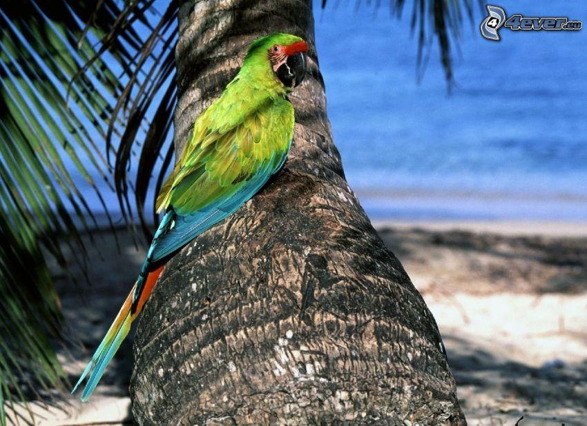 Papagei, Palme, Stamm