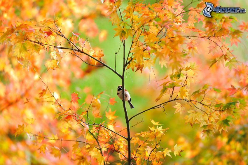 Spatz, gelber Baum